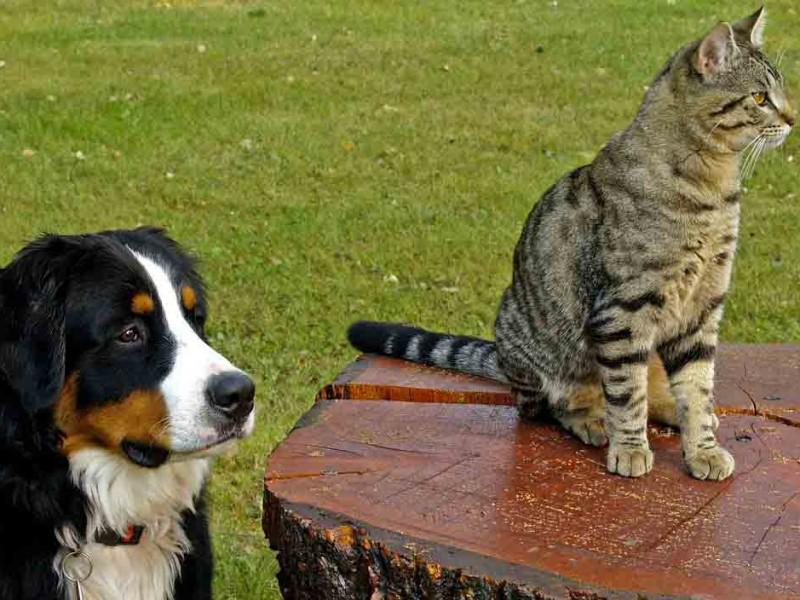 Vacances avec animaux : les solutions